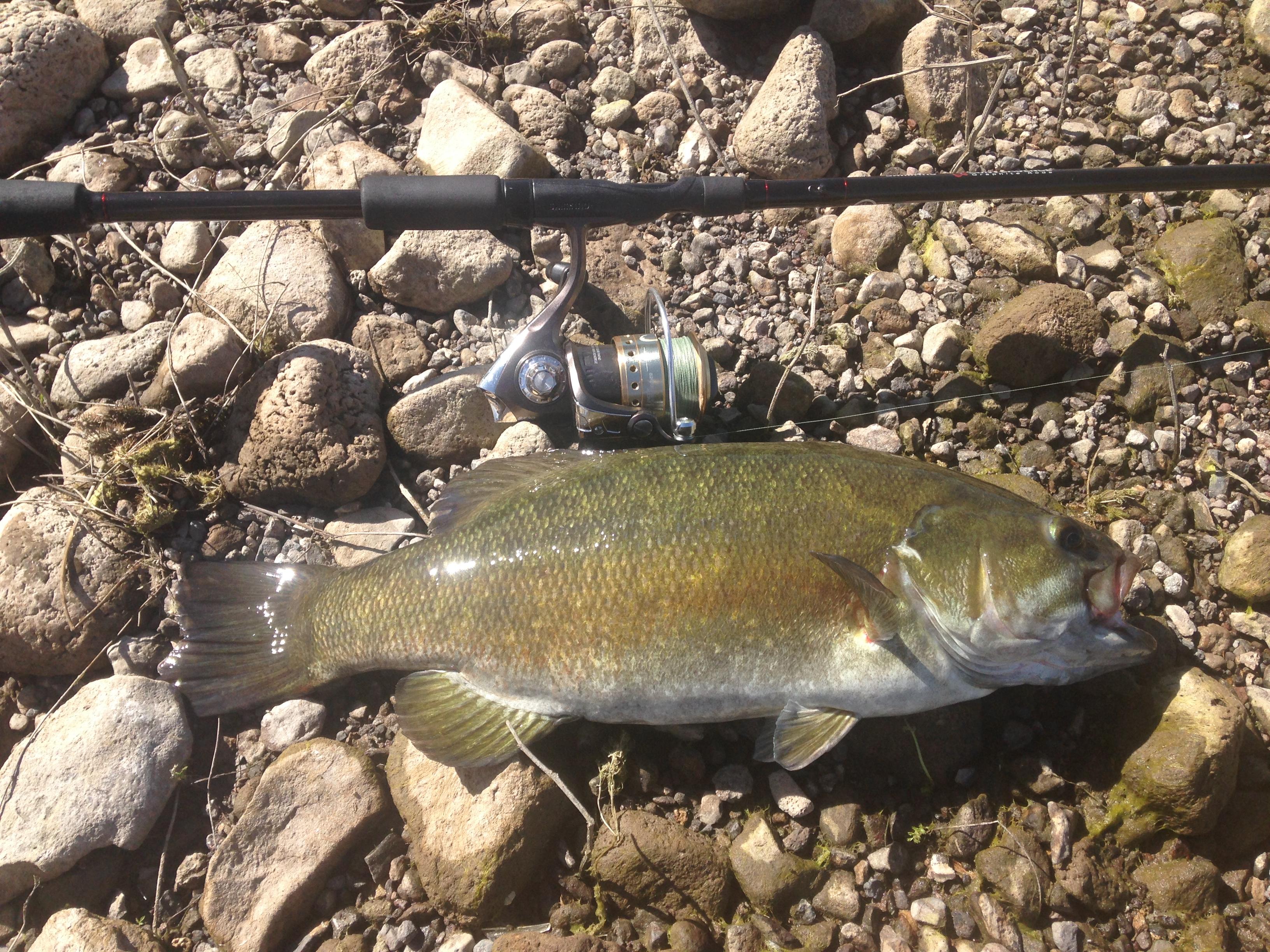 Minersville Bass Fishing