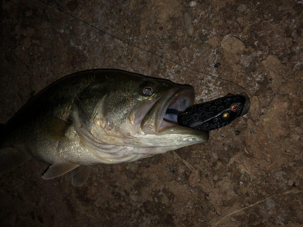 Good Night Bass Fishing Lures