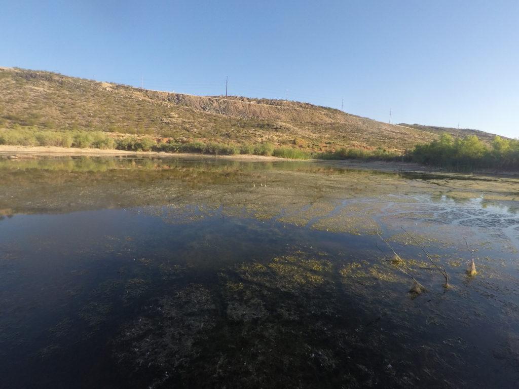 bass fishing heavy weeds & vegetation
